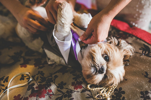 Pets at the Wedding? Yay or Nay?